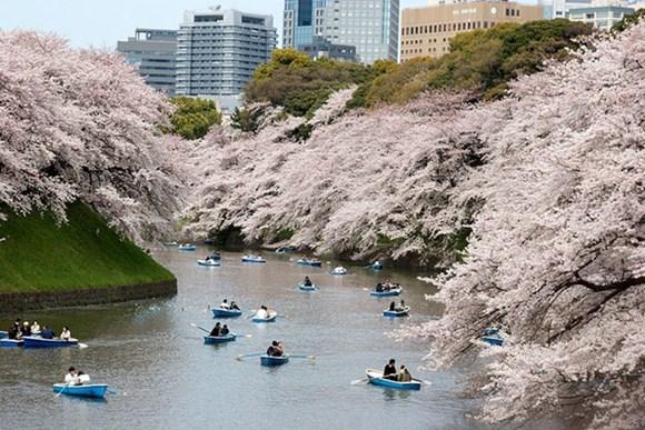 Kết quả hình ảnh cho Thành phố hoa lệ Nhật Bản
